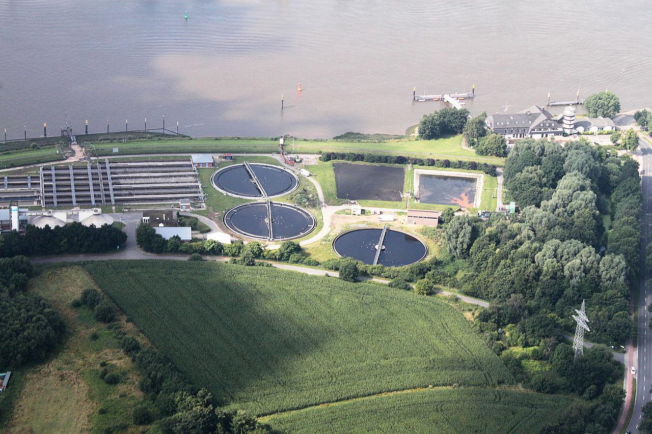 wikimedia commons / Bin im Garten